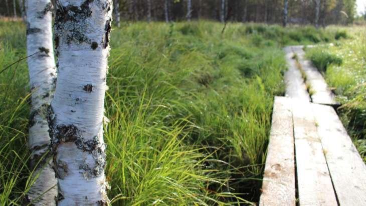 Onninpolun pitkospuut.