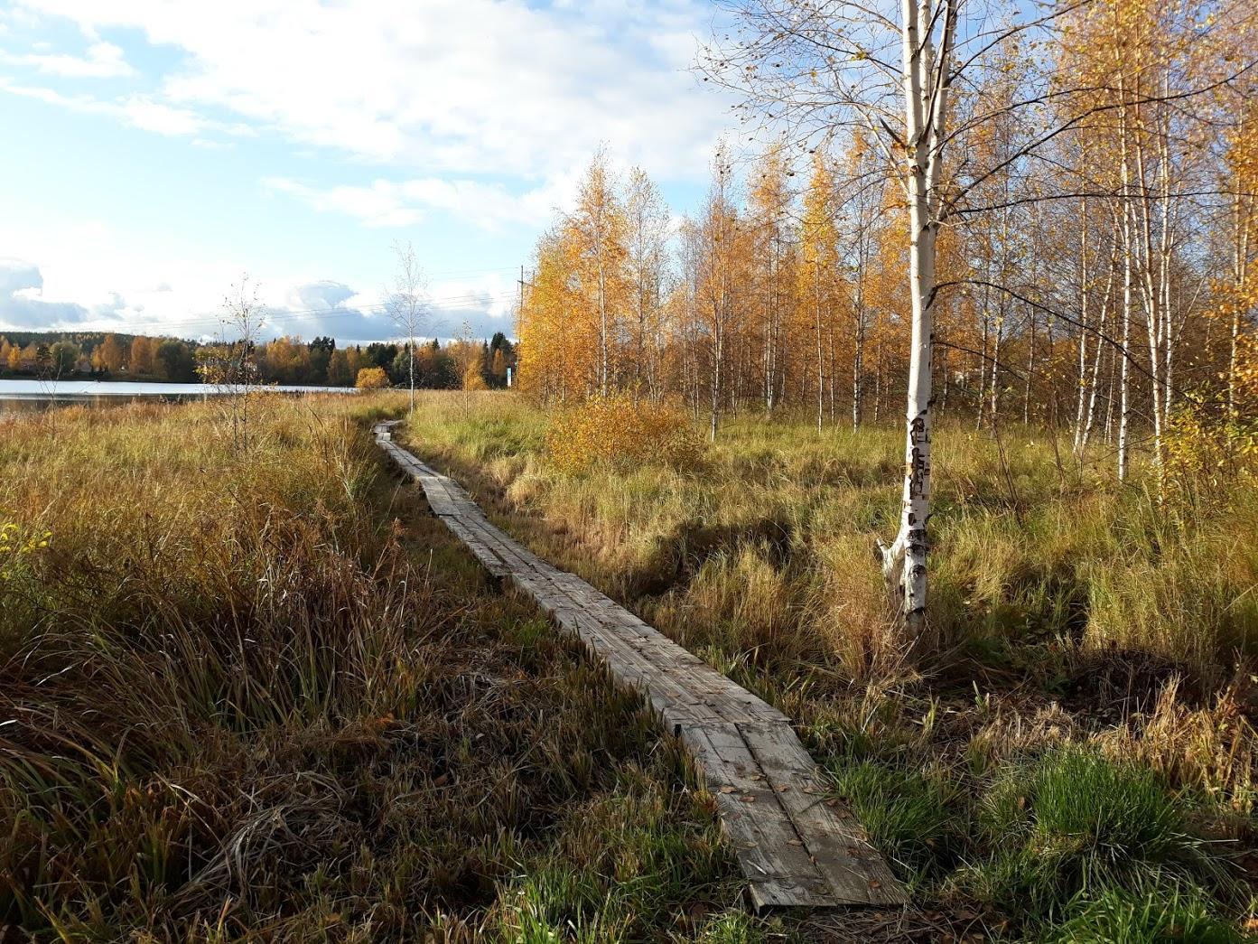 Onninpolkun pitkospuut syksyllä ruskan aikaan.