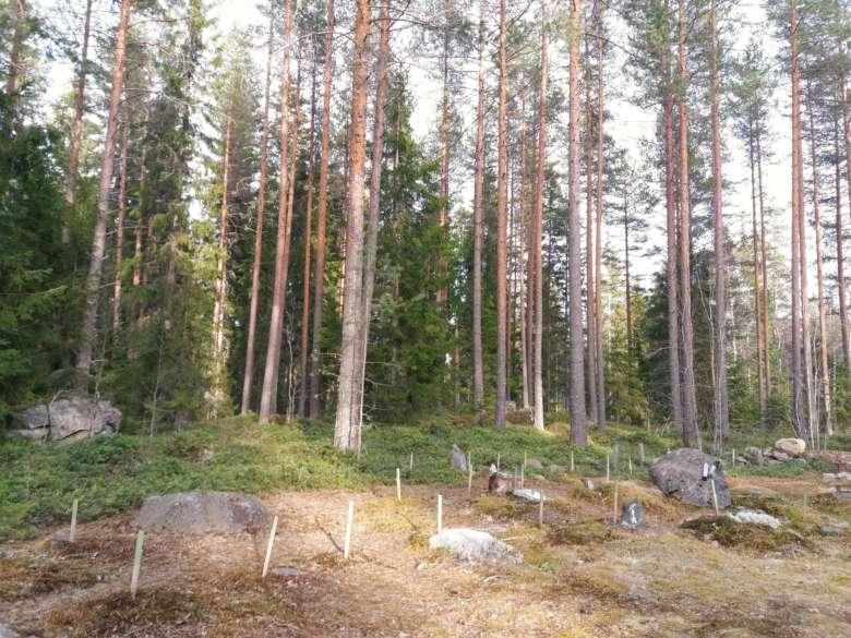 Oriveden pieneläinhautausmaa. Etualalla useita pieneläinhautapaikkoja ja takana puita. Puut ovat mäntyjä ja joukossa on muutama kuusi. Maassa näkyy myös 5-6 isoa kiveä.