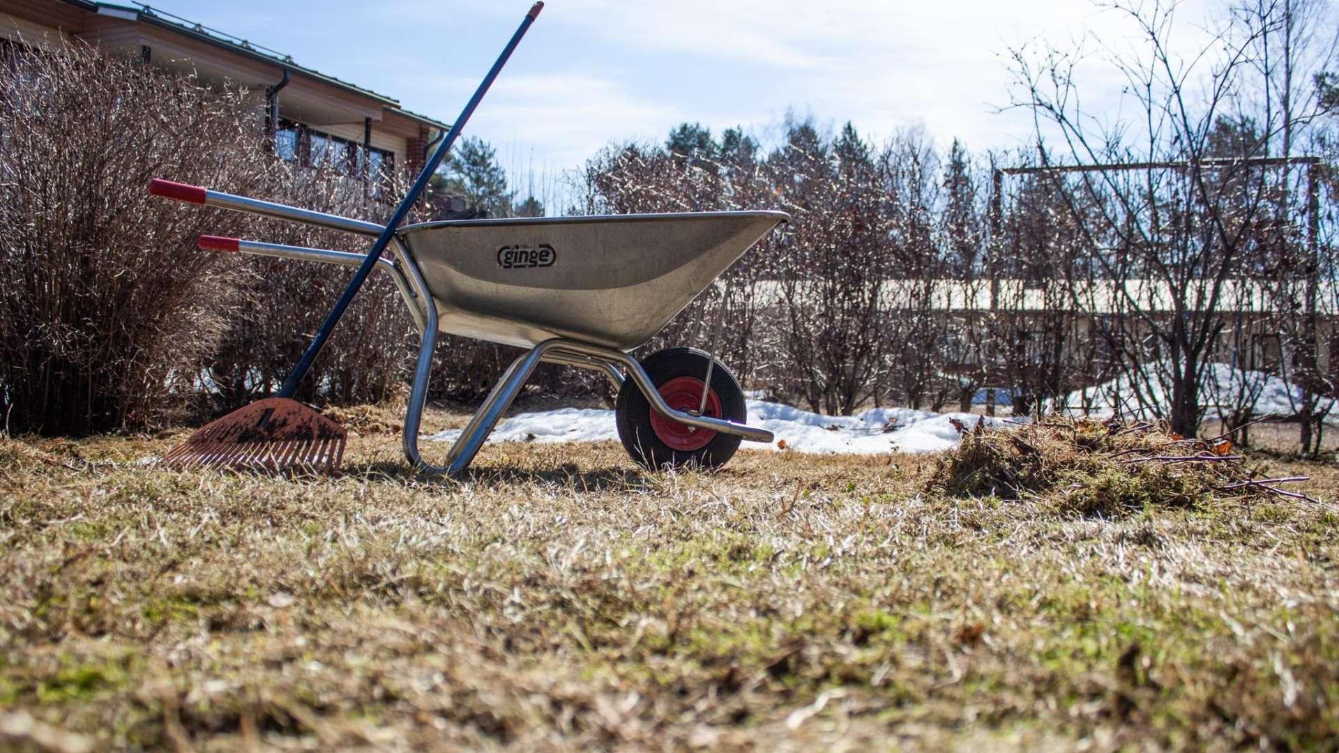 Harava ja tyhjät kottikärryt nurmikolla keväällä. Taustalla maassa on vähän lunta ja näkyy lehdettömiä pensaita ja kaksi rakennusta.