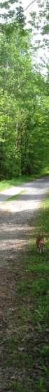 Soratie alkukesän maalaismaisemassa. Aurinko paistaa. Tien vieressä on voikukkia ja lehtipuita.