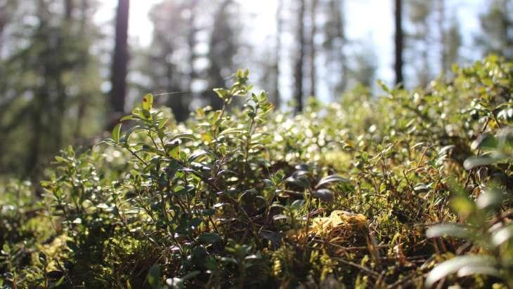 Leppästenvuoren ulkoilureitti kulkee metsässä.
