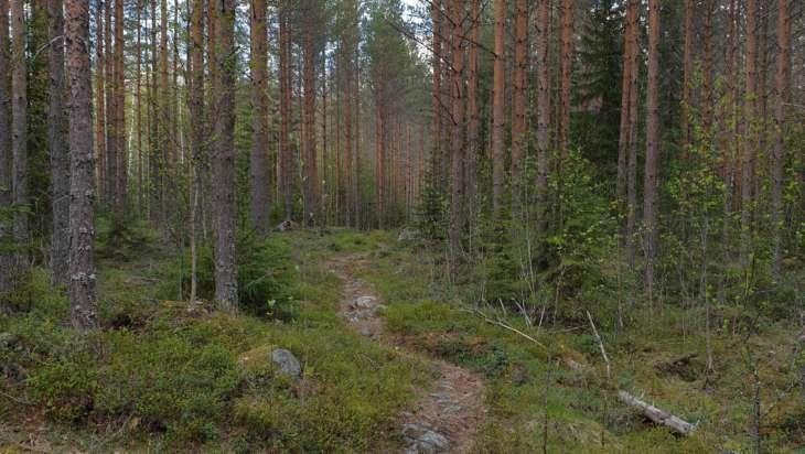 Teerijärven metsissä pääsee liikkumaan polkuja pitkin.