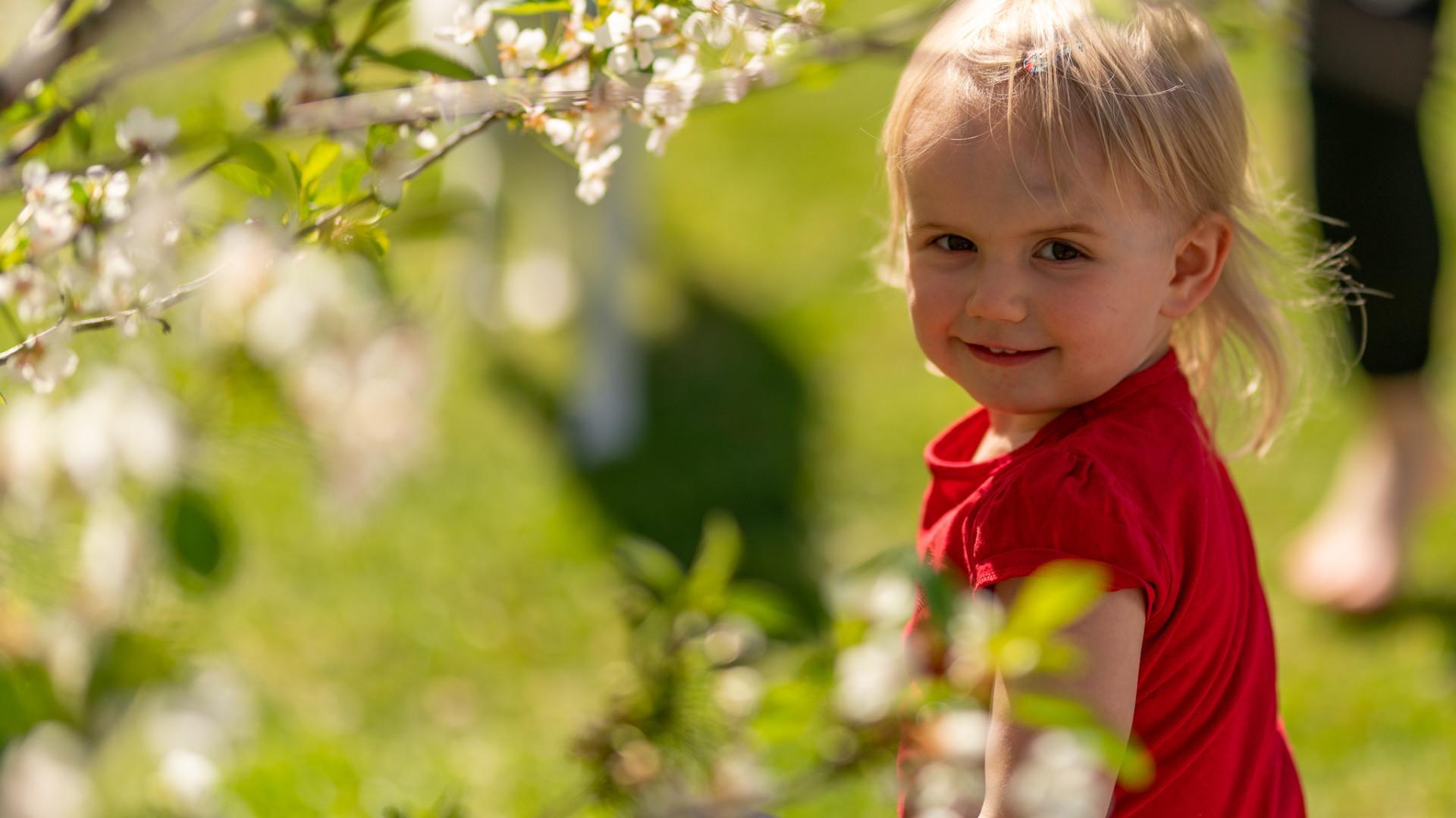 Pieni tyttö omenapuun katveessa.
