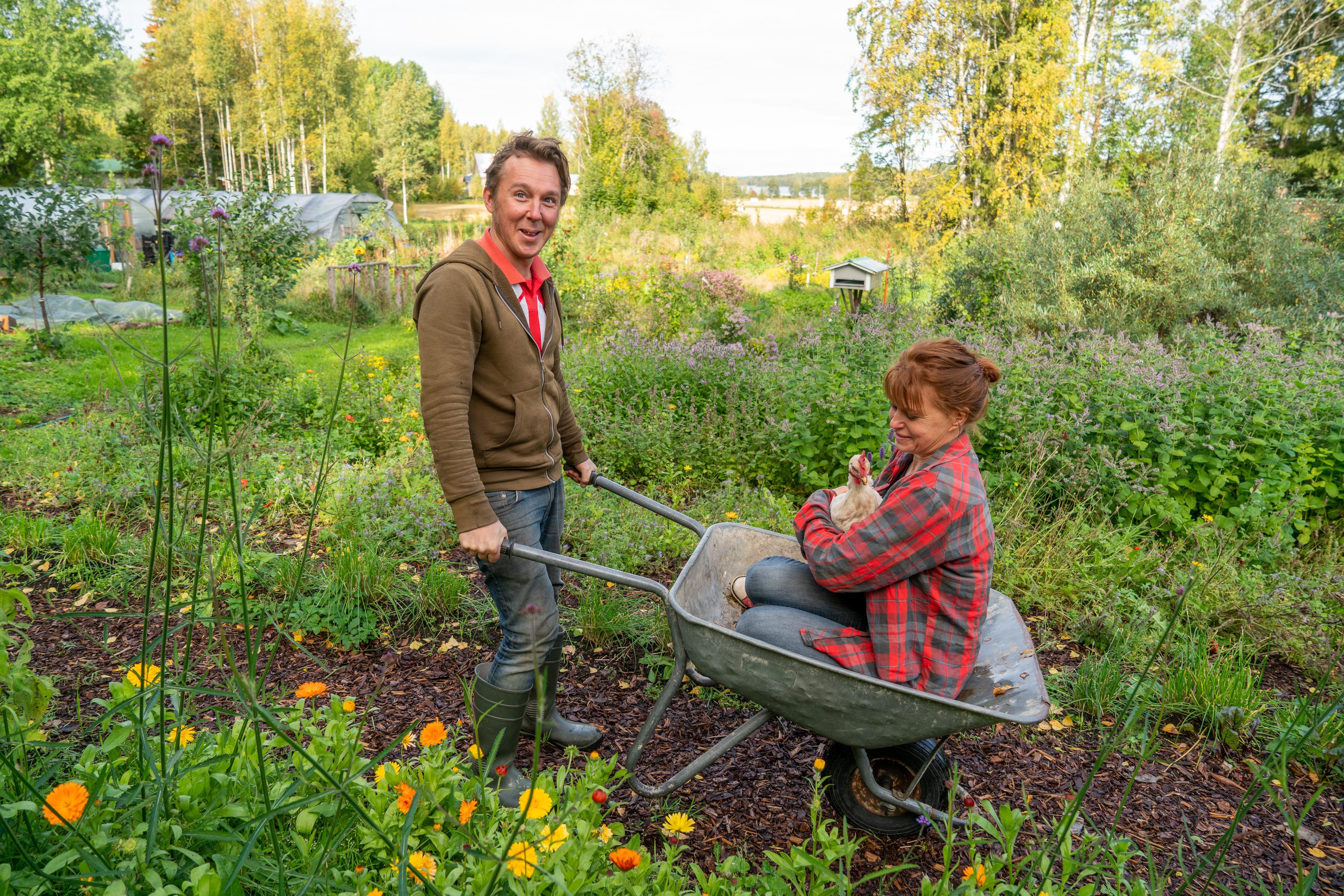 Glenn työntää Piaa ja Amalia-kanaa kottikärryillä Kaiholan Puutarhan pihalla.