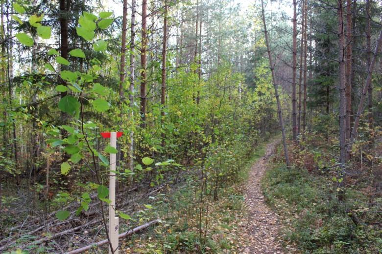 Merkkipaalu ja metsäistä polkua Maijan perheen tontilla.
