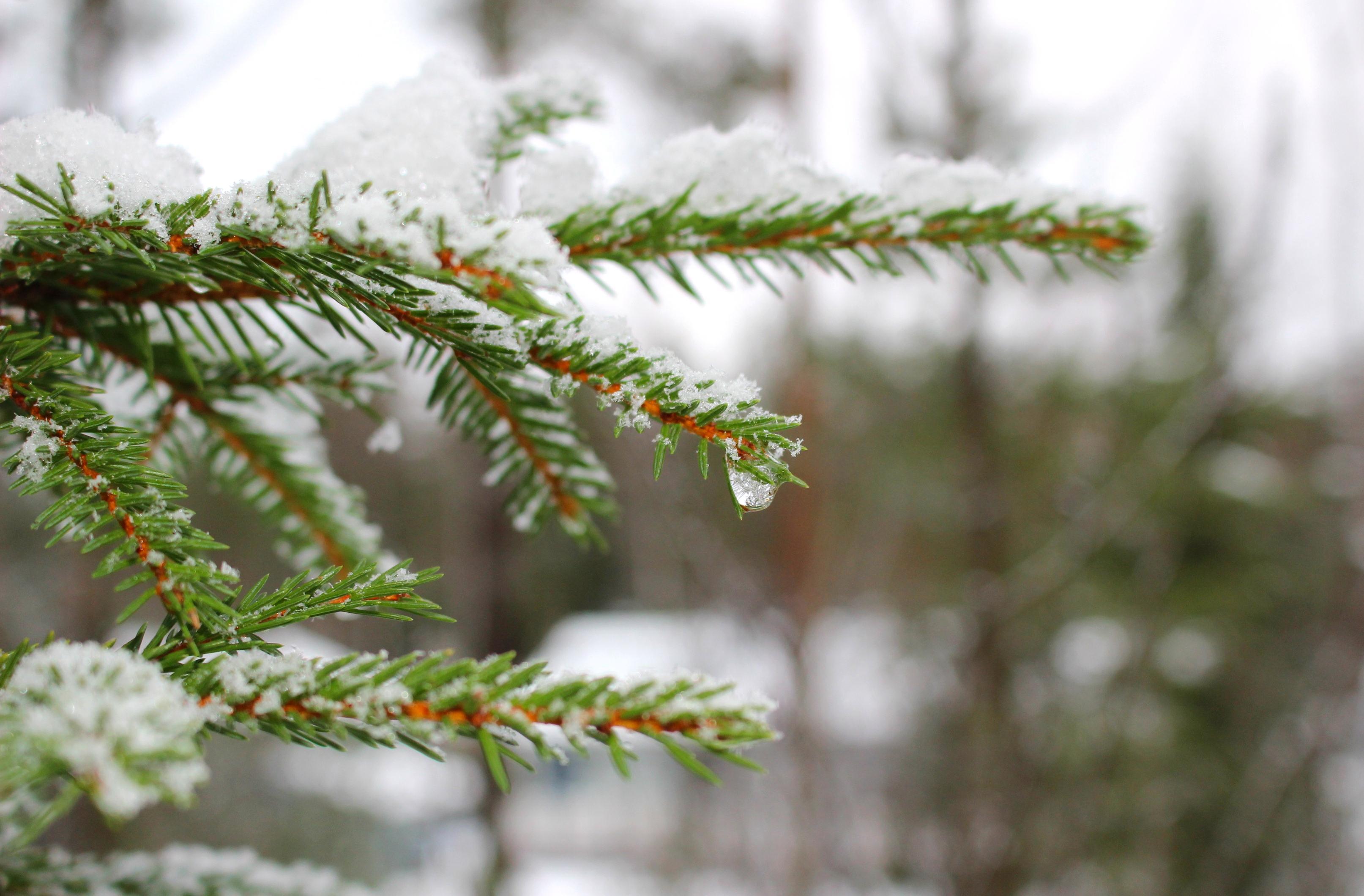 Lumisia havuja Maijan tontilla.
