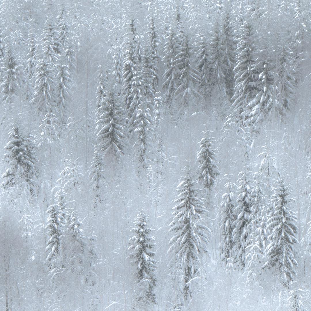 Lumista metsämaisemaa.